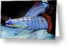 eel Greeting Card by Jane Schnetlage