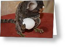 Eggs  Chewy The Marmoset Greeting Card by Barry R Jones Jr