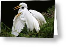 Egret Babies In The Nest Greeting Card by Paulette Thomas