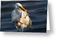 Egret Fishing Greeting Card by Phil Lanoue