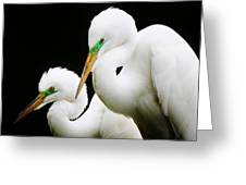 Egret Mates Greeting Card by Paulette Thomas
