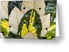 Elaeagnus Pungens 'maculata' Leaves Greeting Card by Dr Keith Wheeler