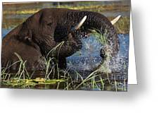 Elephant Eating Grass In Water Greeting Card by Mareko Marciniak