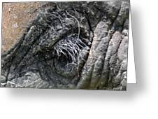 Elephant Eyelash Greeting Card by Joanne Kocwin