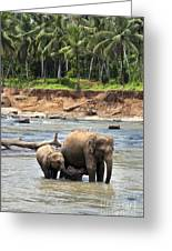 Elephant Family Greeting Card by Jane Rix