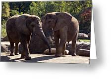 Elephants At The Pittsburgh Zoo Greeting Card by Stacy Gold