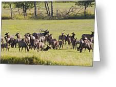Elk Herd In The Bitterroot Greeting Card by Merle Ann Loman