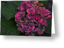 Endless Summer Greeting Card by JAMART Photography