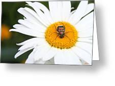 Enemy Mine Greeting Card by Kristin Elmquist