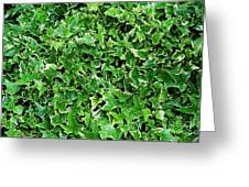 English Ivy (hedera Helix 'kolibri') Greeting Card by Archie Young