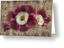 English Primrose Greeting Card by Barbara  White