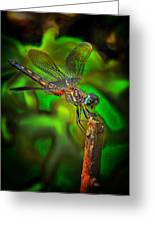 Enhanced Dragonfly Greeting Card by Dave Sandt
