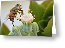 Eristalinus Taeniops Greeting Card by Heidi Smith