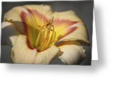 Ethel Brown Daylily 3 Greeting Card by Teresa Mucha