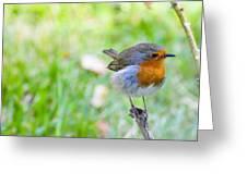 European Robin Greeting Card by Photostock-israel