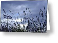 Evening Grass Greeting Card by Elena Elisseeva