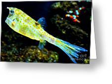 Exotic Fish Greeting Card by Pravine Chester