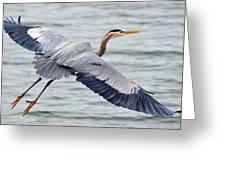 Extravagant Wingspan Greeting Card by Fraida Gutovich