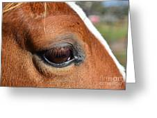Eye Of The Horse Greeting Card by Sandi OReilly