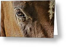 Eye Of The Horse Greeting Card by Susan Candelario