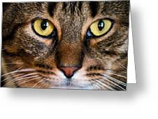Face Framed Feline Greeting Card by Art Dingo