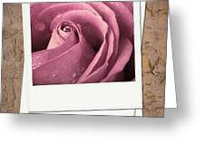 Faded rose photo Greeting Card by Jane Rix