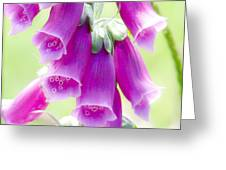 Faerie Bells Greeting Card by Rory Sagner