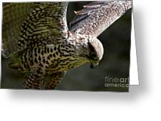 Falcon Taking Off Greeting Card by Pravine Chester