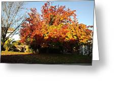 Fall Color 4 Greeting Card by Remegio Onia