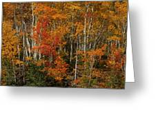 Fall Colors Grand Mesa Greeting Card by Ernie Echols