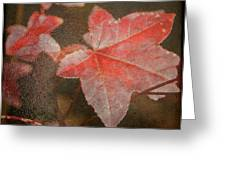 Fall Colors Greeting Card by Jean Haynes