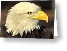 Fall Eagle 1 Greeting Card by Marty Koch