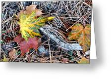 Fall Forest Floor Greeting Card by Will Borden