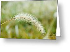 Fall Foxtail Greeting Card by Art Hill Studios