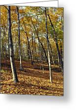 Fall In The Forest 1 Greeting Card by Marty Koch