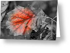 Fall Leaf Greeting Card by Rick Rauzi