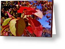 Fall Leaves Greeting Card by Aliesha Fisher