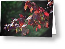 Fall Red Greeting Card by Sandi OReilly