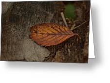Fall Textures Greeting Card by Maria Suhr