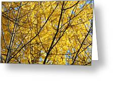 Fall Trees Art Prints Yellow Autumn Leaves Greeting Card by Baslee Troutman