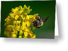 Fanfare For The Common Bumblebee Greeting Card by Lois Bryan