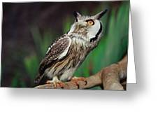 Fearful Owl Greeting Card by Miguel Capelo