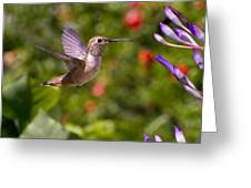 Female Allen's Hummingbird Greeting Card by Mike Herdering