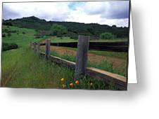 Fence And Poppies Greeting Card by Kathy Yates