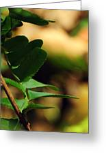 Fern Curve Greeting Card by Rebecca Sherman