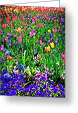 Field Of Flowers Greeting Card by Tamyra Ayles
