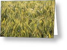 Field Of Green Greeting Card by Mike McGlothlen