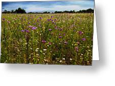 Field Of Thistles Greeting Card by Tamyra Ayles
