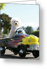 Fifi Goes For A Car Ride Greeting Card by Michael Ledray
