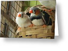 Finches In Their Nest Greeting Card by Arindam Raha